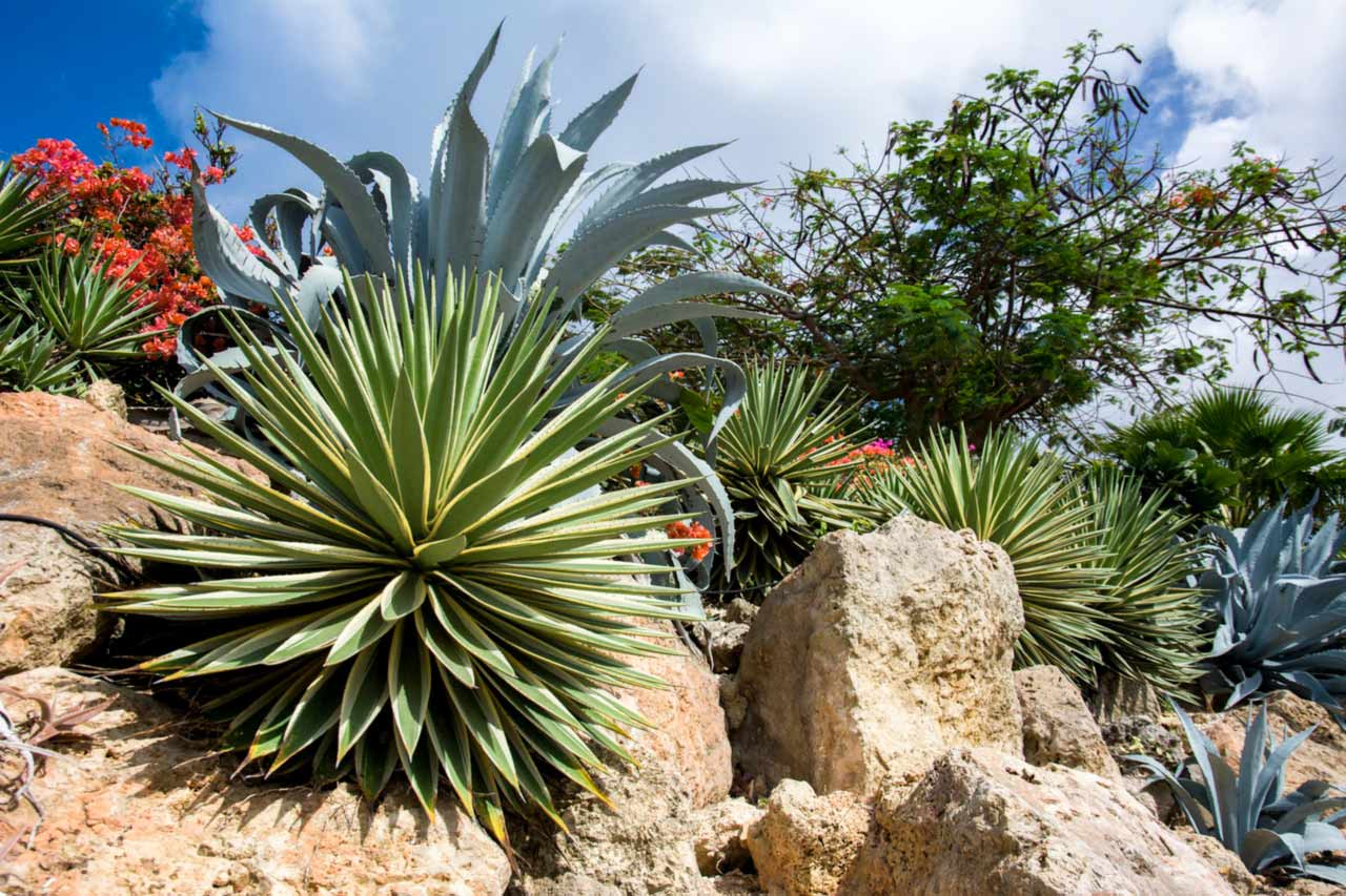 Florida Friendly Landscaping Ideas To Increase New Home Curb Appeal